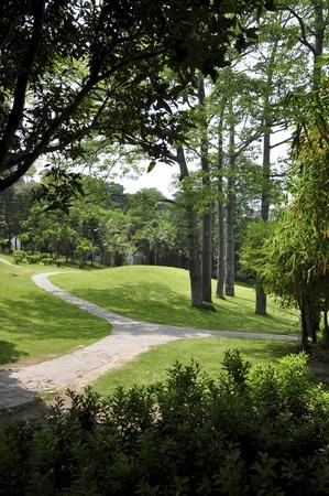 xiamen landscape of avenue Stock Photo - 12011072