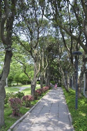 xiamen landscape of avenue Stock Photo - 12001832