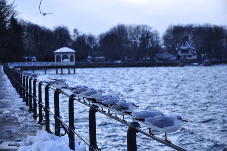 borden: a line of sea gulls standing on the hand railing