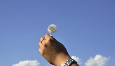 single dandelion with rachis holding by a man photo
