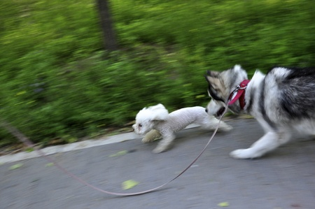 doges fighting in a moving action