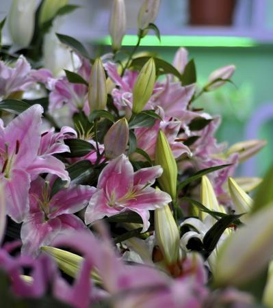 stark: Garten Blume wird dringend bl�hte in Miniatur