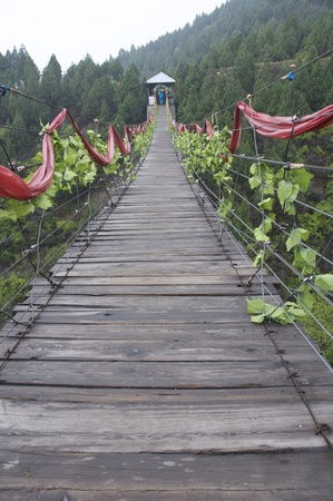 a hanging bridge covered by green leaves Stock Photo - 13550609