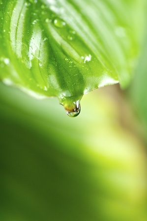 morning drops on green leaves in a wonderful background Stock Photo - 13599576