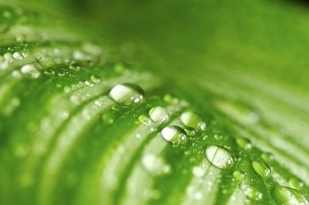stria: morning drops on green leaves in a wonderful background