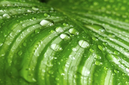 morning drops on green leaves in a wonderful background Stock Photo - 13599627