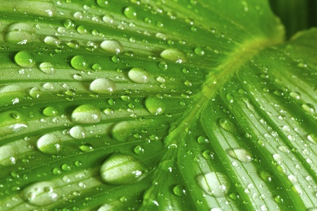 animal vein: morning drops on green leaves in a wonderful background