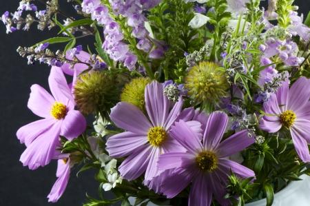 bouquet Cosmos bipinnatus shot in a flower pot photo