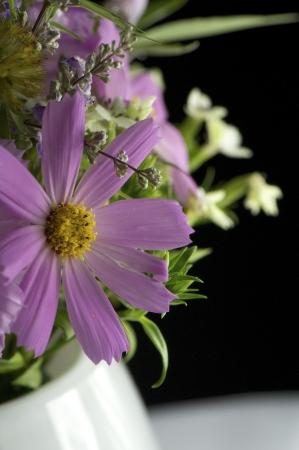 purple Cosmos bipinnatus shot with a close up lens.