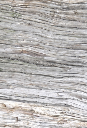 Aged wood bark with irregular texture, can be used as background Stock Photo
