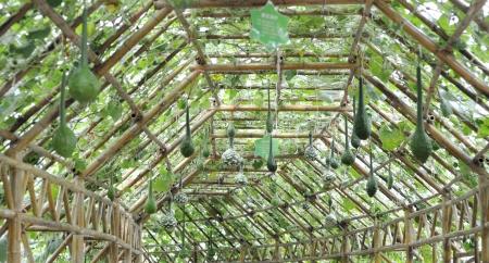L'agriculture moderne de légume vert intérieur de la maison
