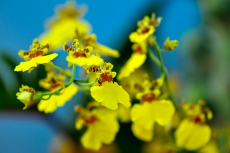 polychrome rare species of butterfly orchids shown in a flower exhibition Stock Photo