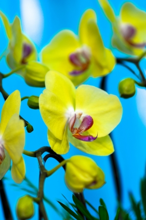 polychrome: polychrome rare species of butterfly orchids shown in a flower exhibition Stock Photo