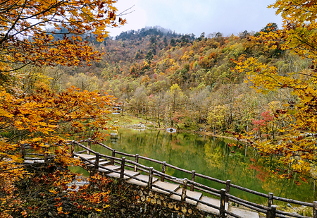 Colorful autumn forest of Erlangshan mountain, in Yana, Sichuan province, China.