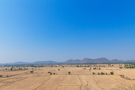 hay field: Hay Field and Blue Sky Without Cloud on Clear Day Stock Photo