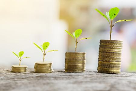 diagrama de arbol: Money growing concept,Business success concept,Trees growing on pile of coins money Foto de archivo