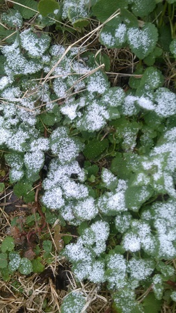 dusting: Dusting of snow on weeds. Stock Photo