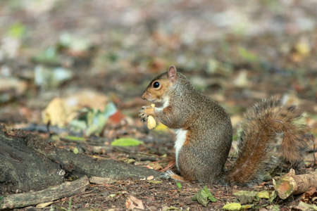 liflife of a squirrel while getting food, in the woods. it's really cute don't you think? There are also shots of other beautiful and cute animals, photos on Lake Varese in Italy