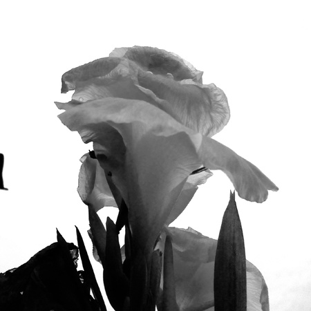 white: Flower on white background