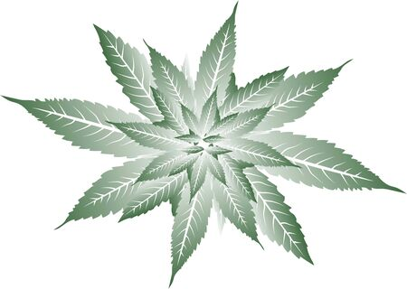Vector cannabis leaves simple background Illustration