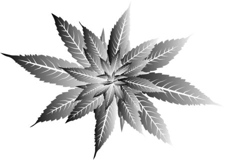 Vector Cannabis Leaves Black and White Background