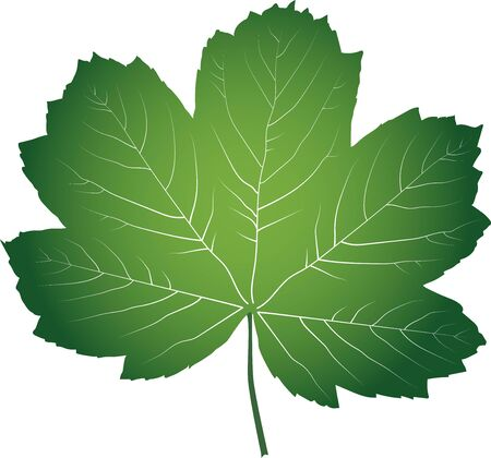 Green maple leaf Ilustrace