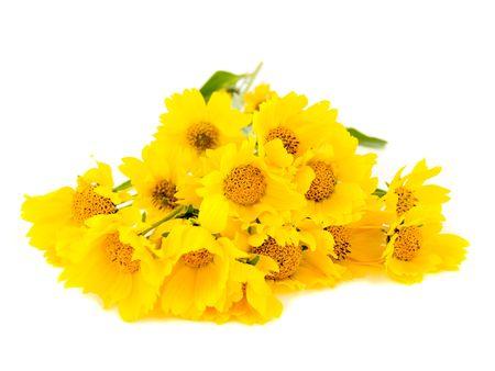 Yellow wild sunflowers isolated on white background. Banco de Imagens