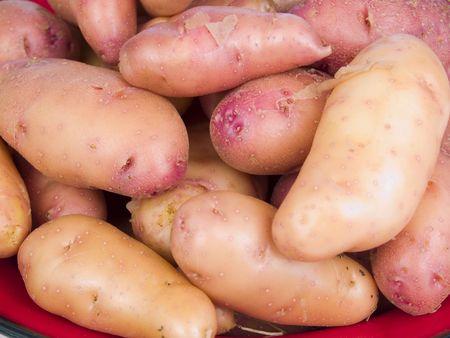 fingerling: Garden fresh rose fingerling potatoes on a red plate