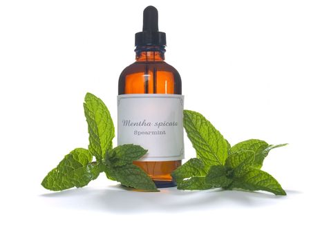 Spearmint leaves with extraction or essential oil in eyedropper bottle - Mentha spicata Stock Photo - 5882853