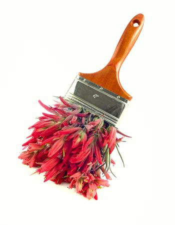 Natural nontoxic paint concept - red wildflower paintbrush