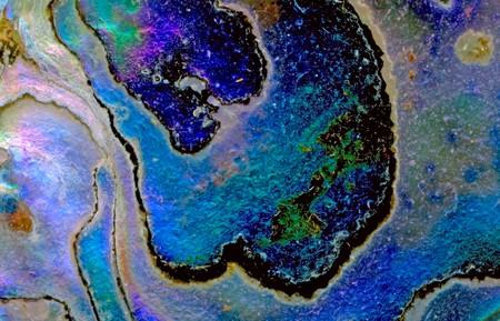 Natural Californian abalone shell background Stockfoto