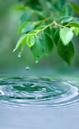 Green leaves and a water drop - the focus point is the water drop in the air and the small leaf above it.