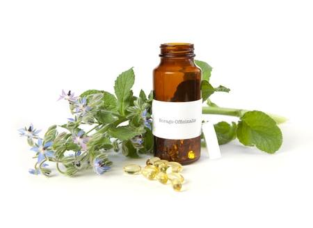 gamma: El aceite de borraja, Borago officinalis. La etiqueta se hizo para la sesi�n fotogr�fica, marca comercial o marca sin nombre de los derechos de autor de infracci�n. Foto de archivo