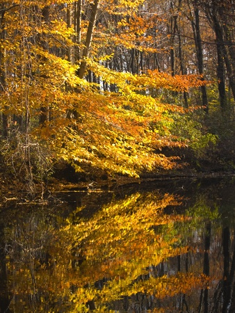 Autumn leaves reflecting from a river photo