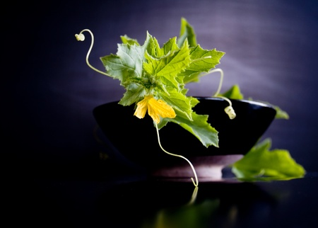 Cucumber vine and a bowl of infused water. Extremely shallow DOF, yellow cucumber flower is  focus point.