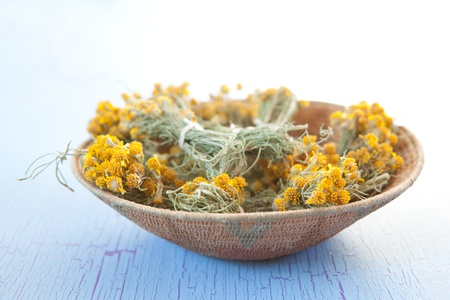 indigenous medicine: Cota traditional tea bags, Thelesperma gracile, also known as Navajo, Hopi or Indian Tea, Hohoise in Dine. Cota is also used a dye plant to produce a beautiful rusty color. Stock Photo