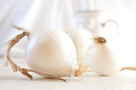 onions: Cebolla blanca naturaleza muerta. DOF.