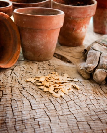 Seeds for planting in terracotta pots  Stock Photo
