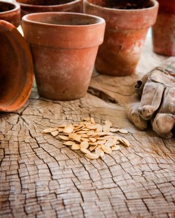 Zaden voor het planten in terracotta potten