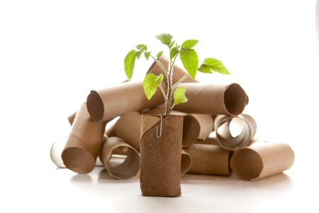 planter: Empty toilet paper roll recycled as a seedling planter Stock Photo