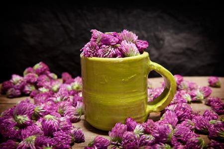 Red clover for tea, Trifolium pratense, freshly picked ready for drying.