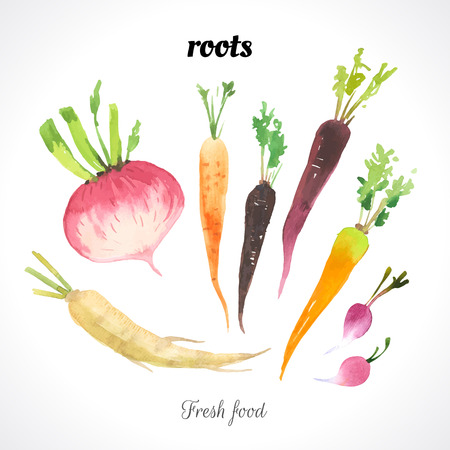 Fresh organic food. Provencal style. Set of roots. Carrot, radish & parsley root.