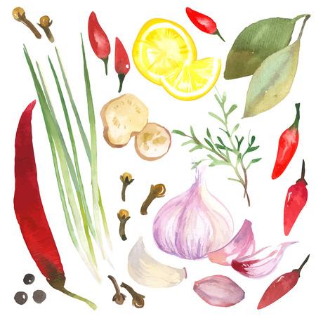 comida: Conjunto de la acuarela de hierbas y especias dibujados a mano sobre un fondo blanco.