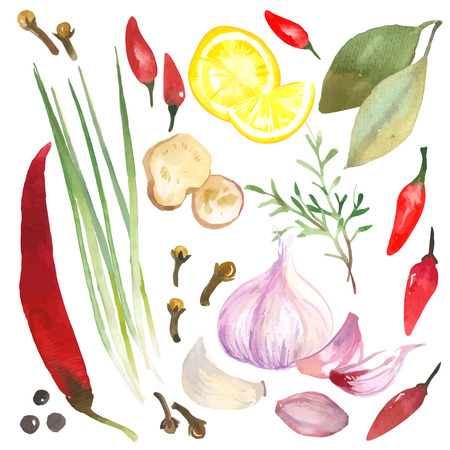 food illustrations: Watercolor set of herbs and spices drawn by hand on a white background.