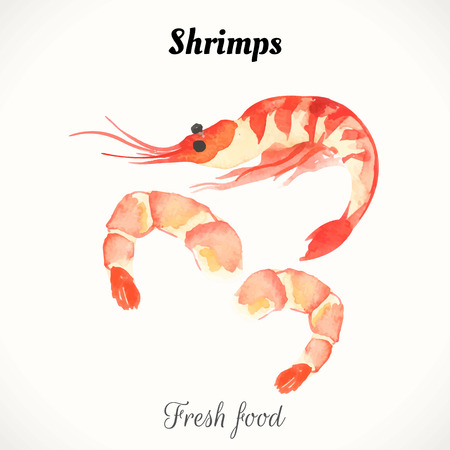 shrimp: Watercolor shrimp. Sea food fresh. Handmade painting Illustration