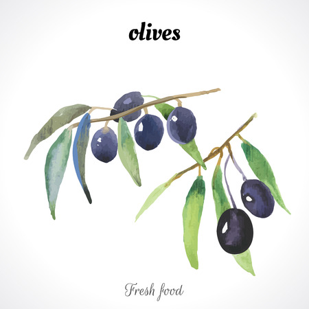 recent: Watercolor olive. Provencal style. Recent watercolor paintings of organic food.