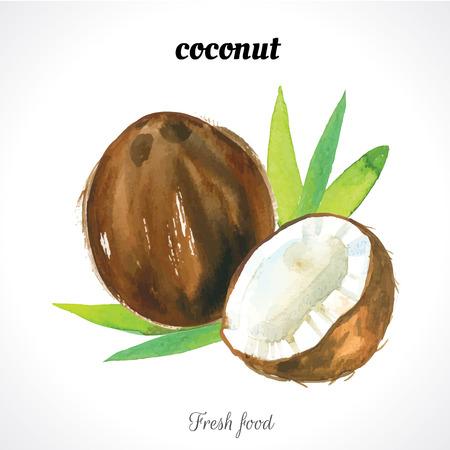Watercolor kokosnoot. Noten. Waterverfillustraties van biologisch voedsel. Exotisch voedsel.