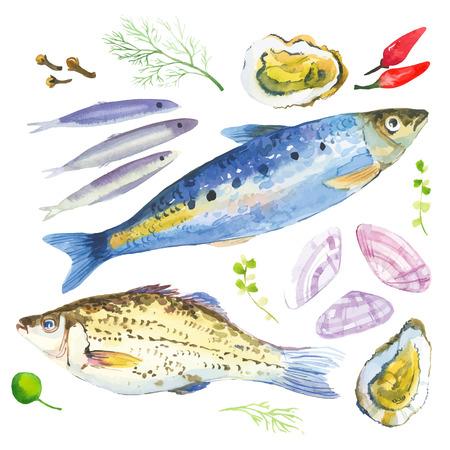 수채화는 생선, 해산물, 굴, 사르 디나, 바 질, 다른 허브와 향신료로 설정합니다. 흰색 배경에 손으로 그린.