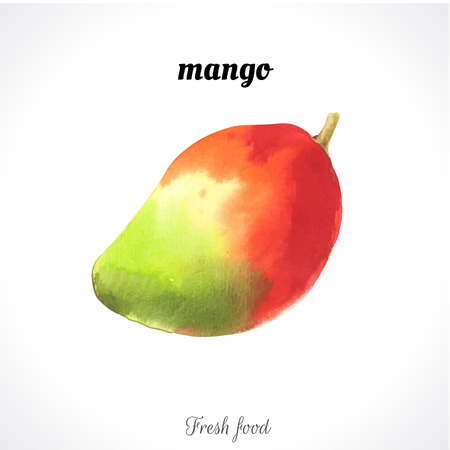 watercolor technique: Watercolor illustration of a painting technique. Fresh organic food. Mango exotic fruite Illustration