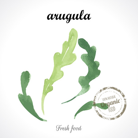 recent: Watercolor arugula. Provencal style. Recent watercolor paintings of organic food. Veggie menu